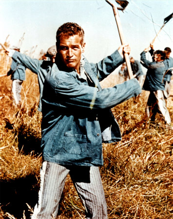 Cool Hand Luke Color